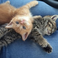 Kittens with cassandra